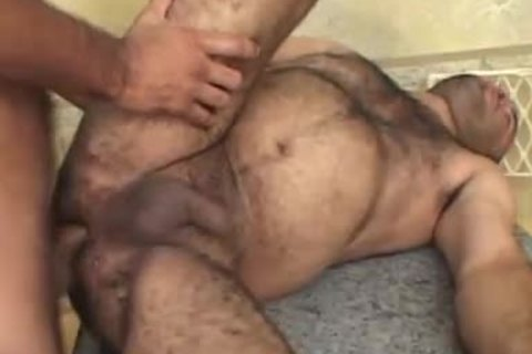 Bears slam With penis-sock After Petting