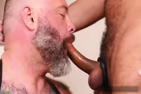 hairy Daddies Playing unprotected